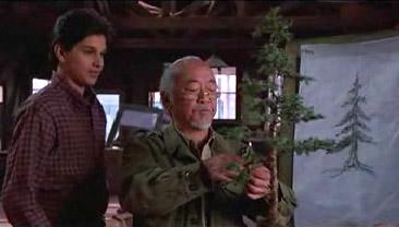 """Bonsai"", not ""BANZAI!"" There's a difference, Daniel-San."